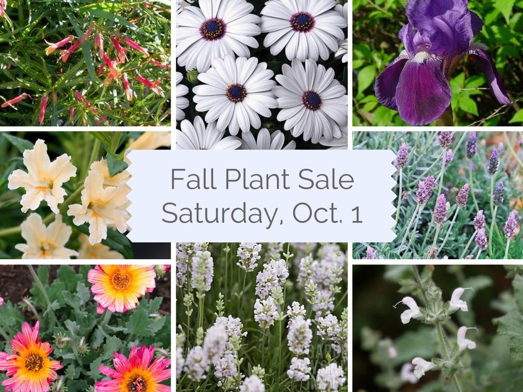 Plant Sale The Gardens At Heather Farm