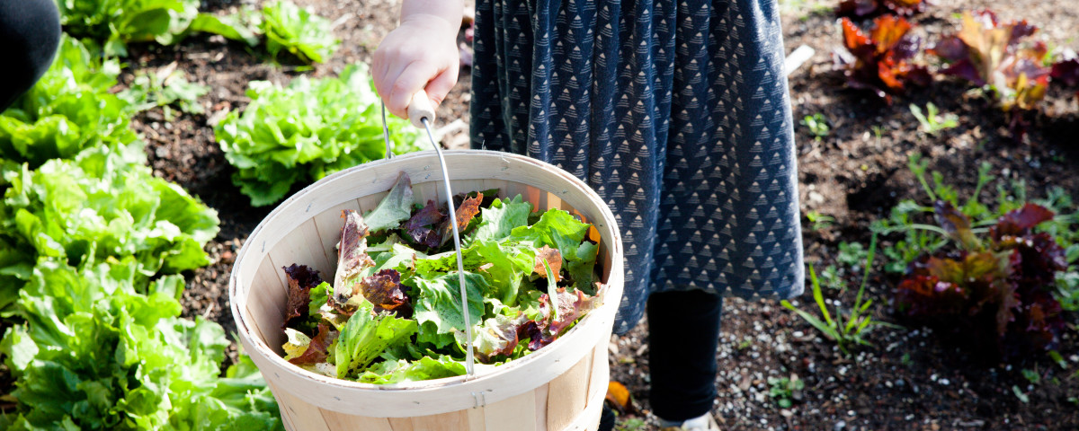 Kids enjoyed picking fresh greens from the garden and eating them in their own salads.
