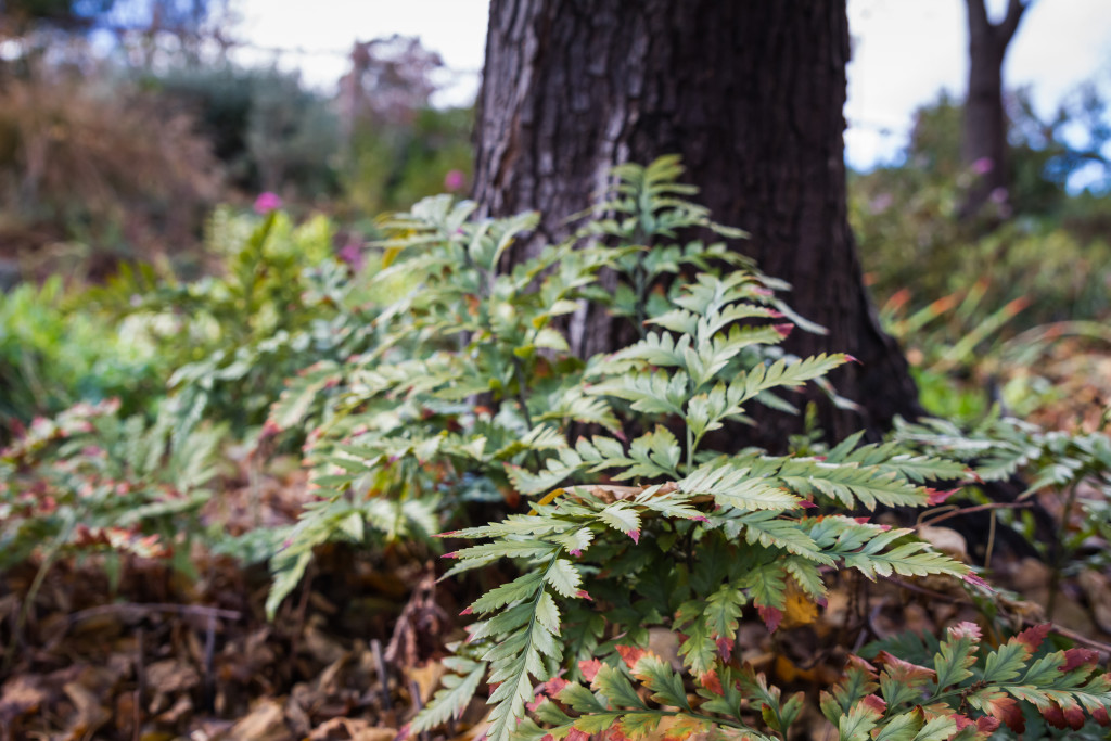 Ferns and Chinese Tallow trees grow well with limited water resources.