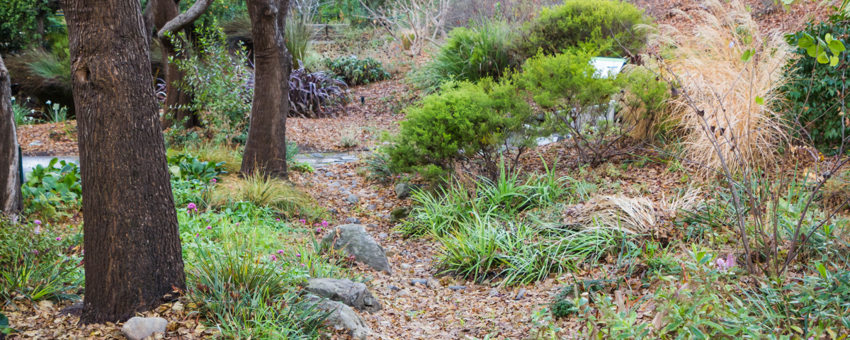 See water-conserving gardening at work in the EBMUD Garden.