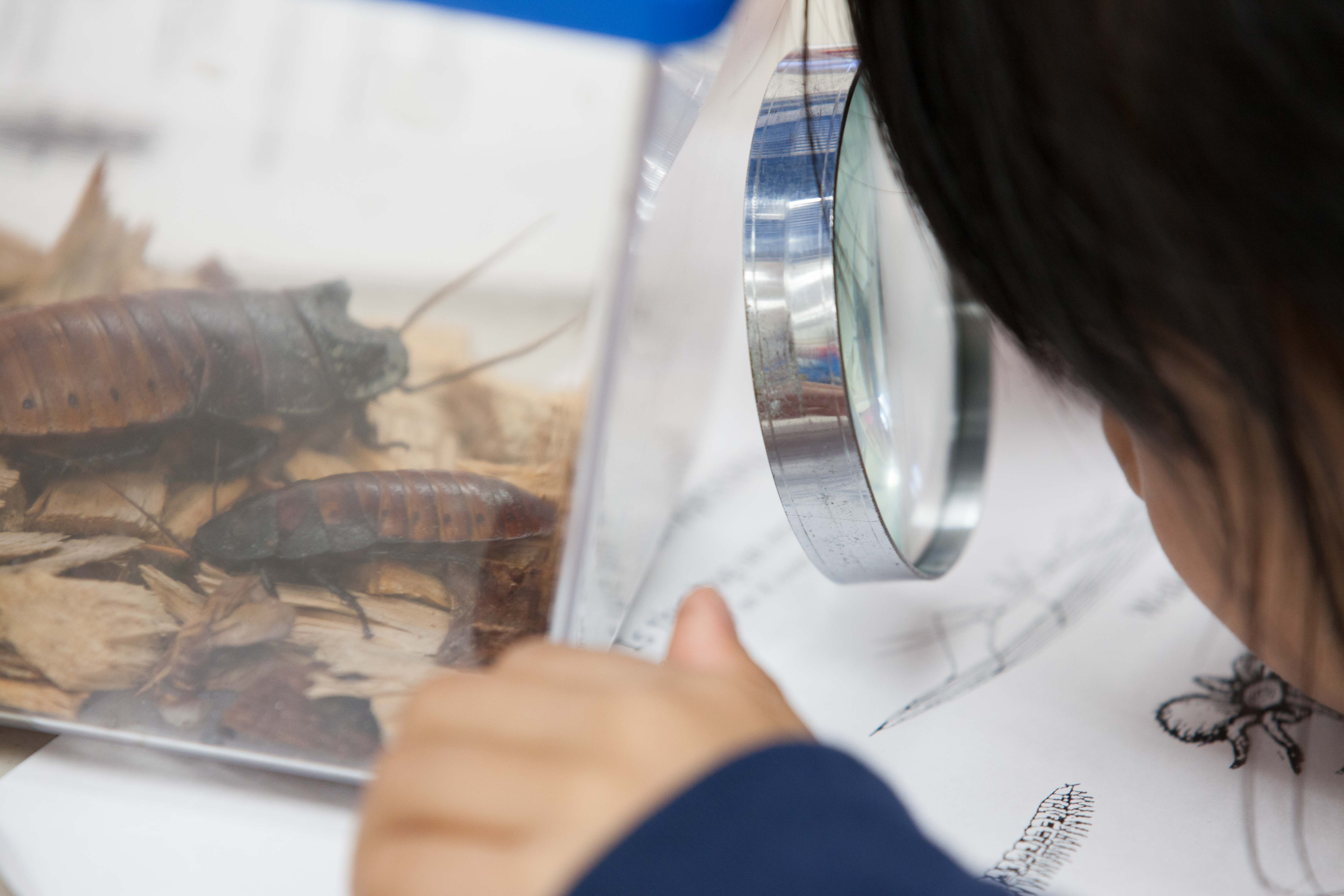 Students become buddies with bugs in our Natural Science Classroom program.