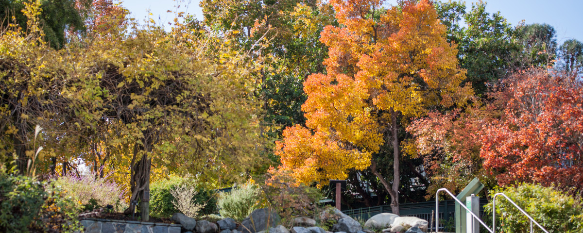 Leaves change color as autumn rolls through the garden.