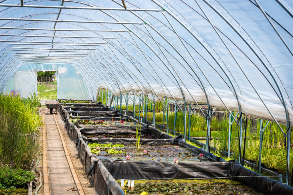 Large greenhouse, plant nursery, garden centre