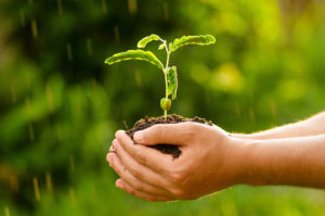 Plant,Agriculture,Seed,Seeding,Tree,Forest, Male hand holding sp