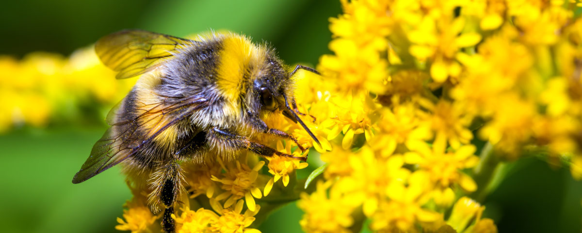 bee, flower, garden, pollinator